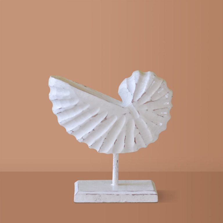 Antique White Shell
