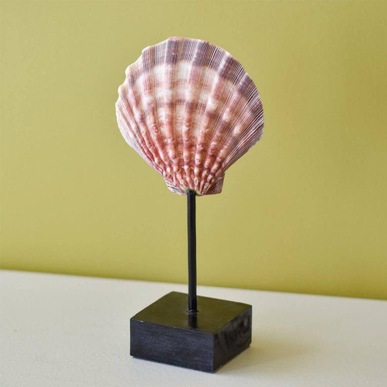 Pink Shell on Stand