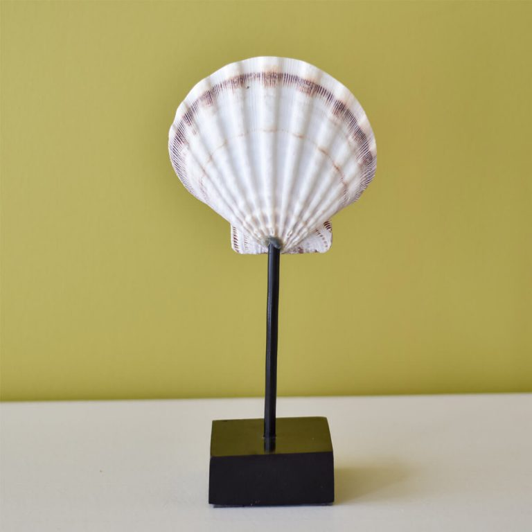 White Shell on Stand