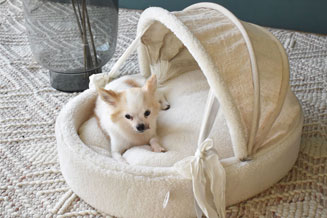 Best pet beds in dubai abudhabi uae